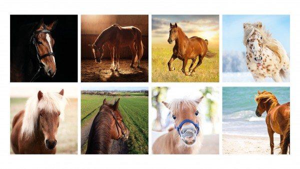 Remember - Remember 44 'Pferde' in der Magnetbox